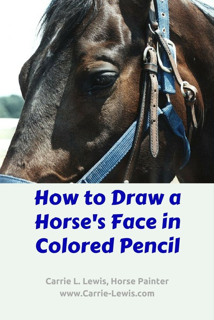 How To Draw A Horse's Face In Colored Pencil Part 1 In A Series Of