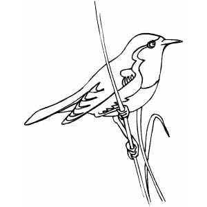Little Bird On Stalk