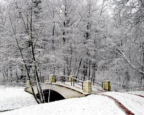 Snow florest