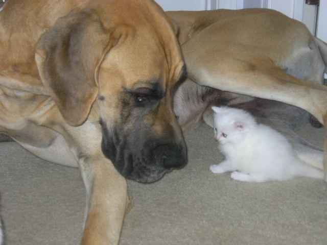 Big Dog Little Cat by June-Cleaver.deviantart.com on @deviantART