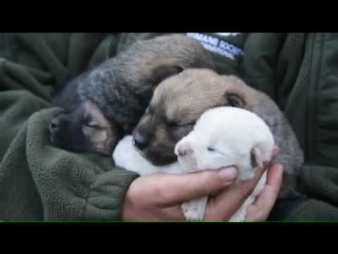 Dogs Rescued from Slaughter Arrive in Schuylkill County - YouTube