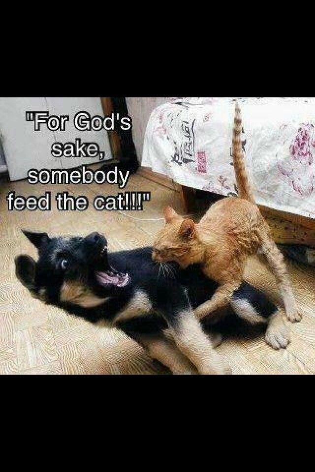 Yep Except Its Our Dog Eating The Cat With Images