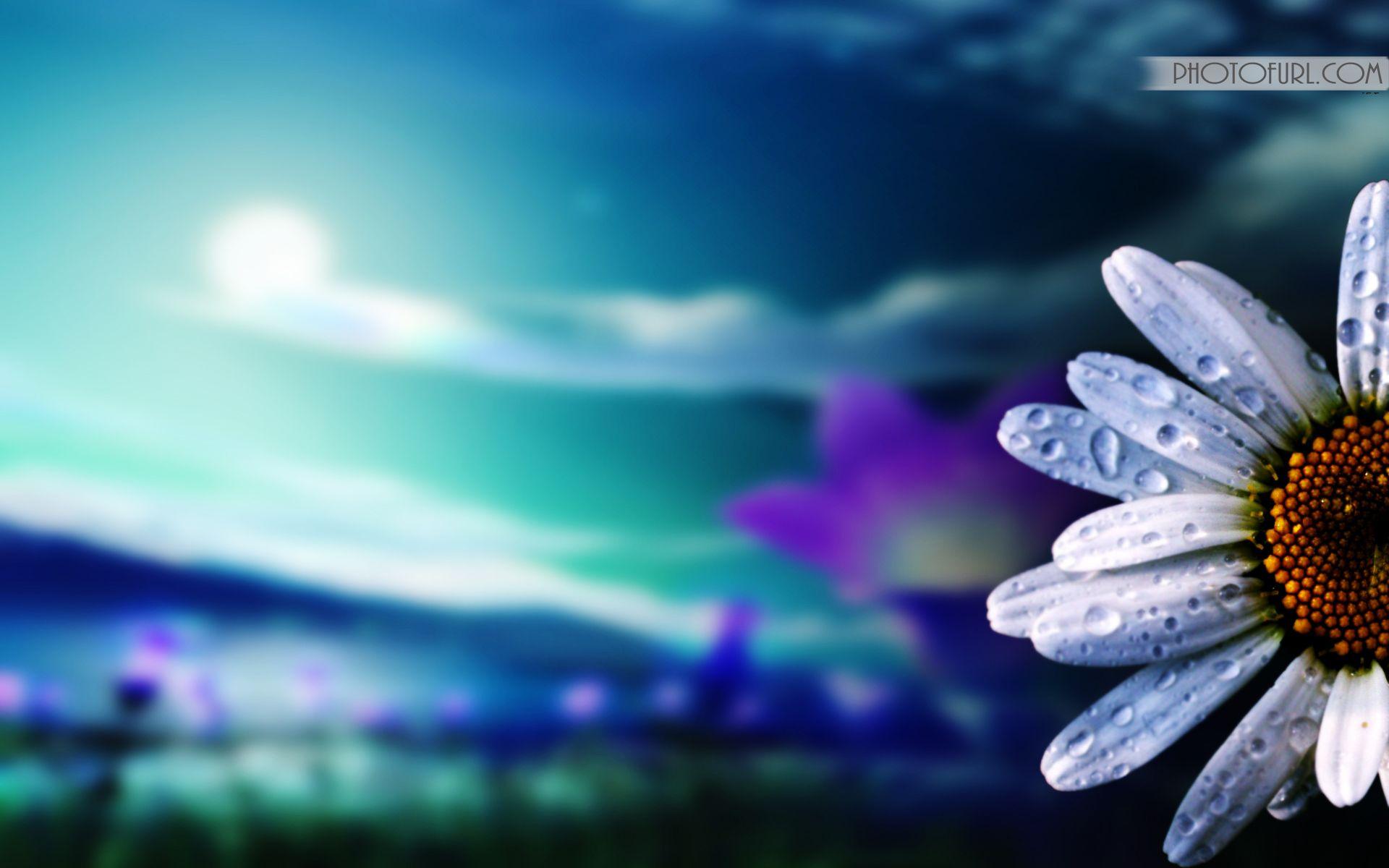 Beautiful Flowers Colourful Wallpaper Wallpapers Desktop