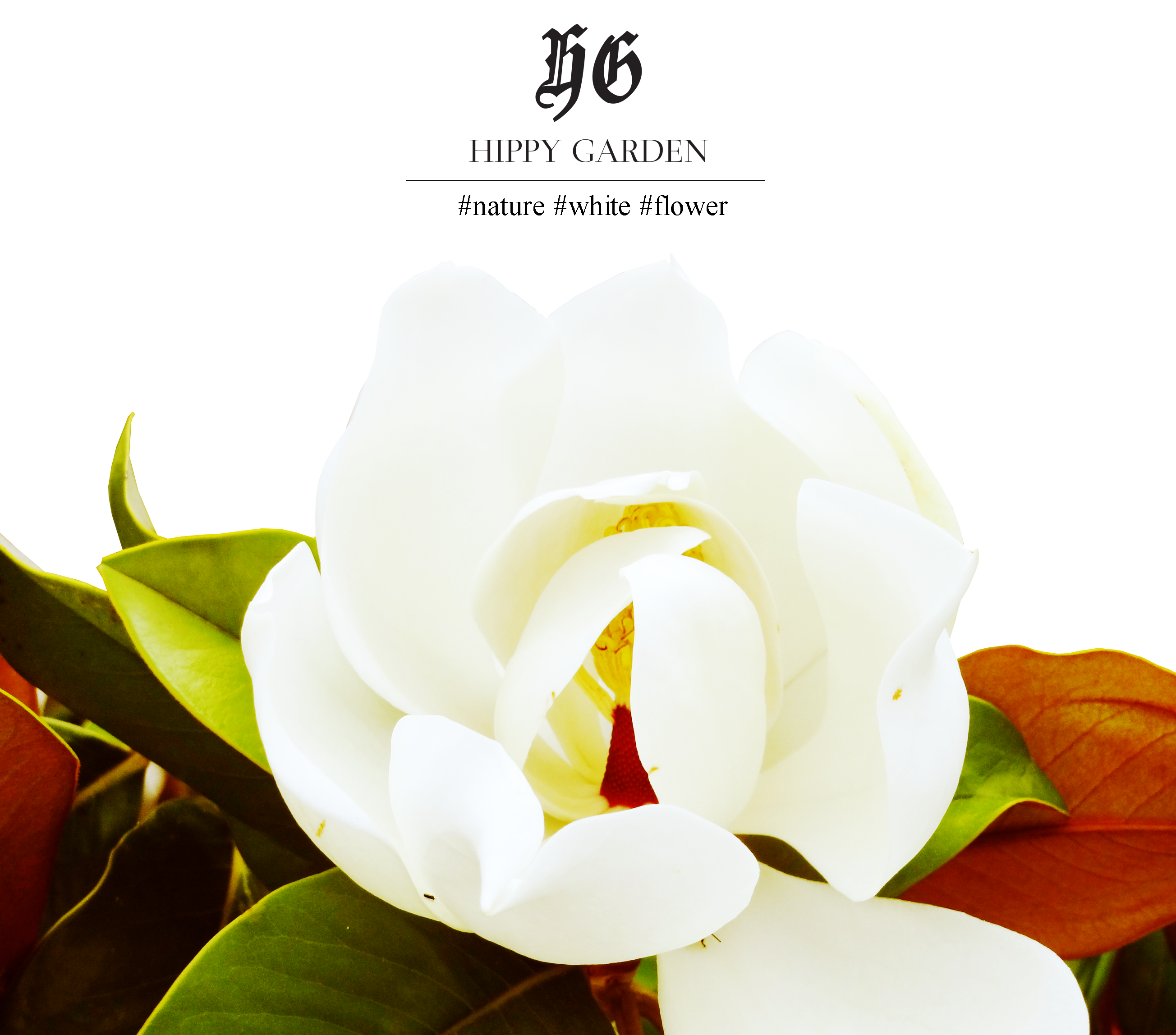 Hippy Garden Showroom Masarykova 5 http://hippygarden.net/products-page/dresses/  #fashion #brand #design #hippygarden #croatia #masarykova5 #love #nature #flower #beautiful