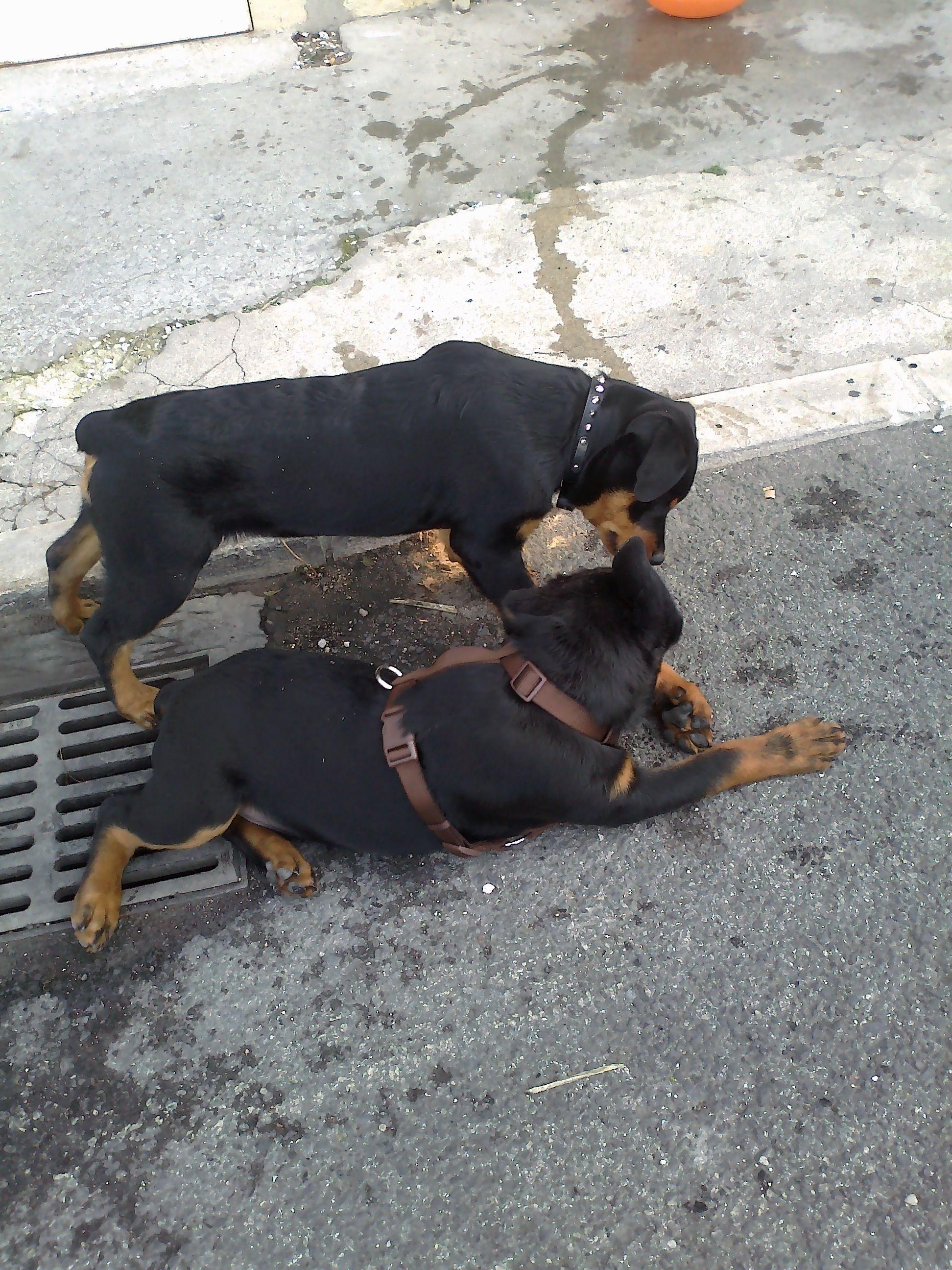 izzy e seu irmão thor