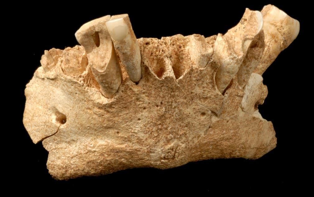 A researcher discovered how cavemen cleaned their teeth