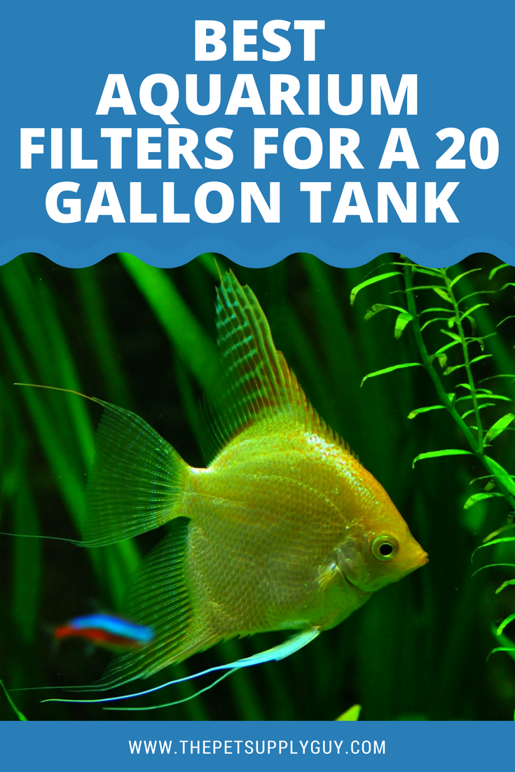 If You Are In The Market For A New Filter For Your 20 Gallon