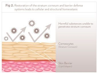 What Is Corneotherapy Skin Barrier Therapy Information