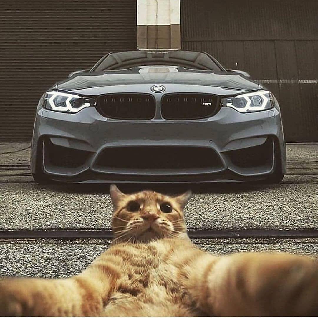 دودج تشارجر كابرس سيارات لومينا سوناتا كامري تشالجر سيارات امريكي سيراا سلفرادو فور A Bmw Super Cars Bmw Cars