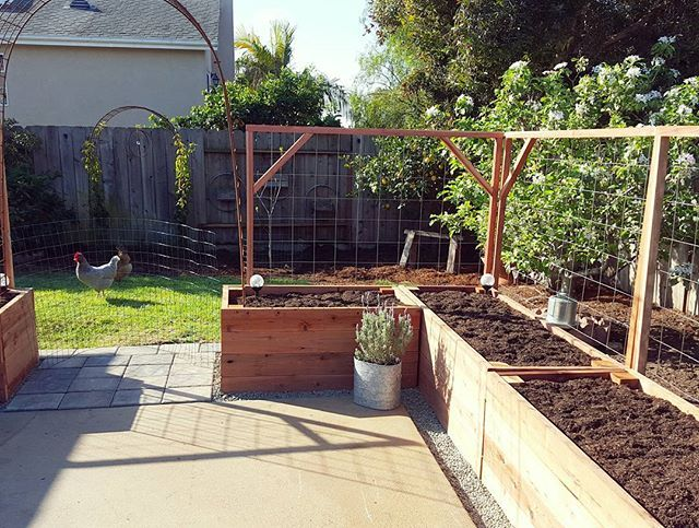 Deanna T On Instagram Beds Filled With Soil And Compost Trellises Attached Next Stop Gate Building And Ras Growing Raspberries Backyard Garden Compost