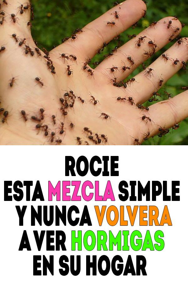 Como Acabar Con Las Hormigas En Mi Cocina Rocie Esta Mezcla Simple Y Nunca Volvera A Ver Hormigas En Su