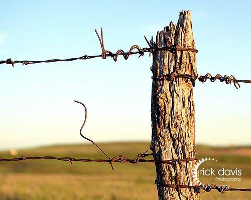 Fence Post Fence Post Fence Cedar Fence Posts