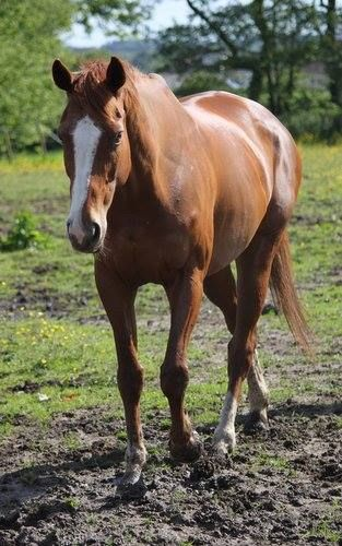 (96) Equine Photography - Photos