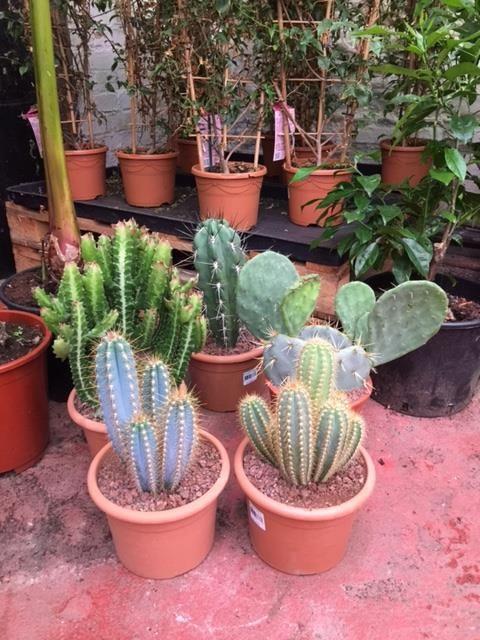 More Cacti At Urban Plant Life Garden Centre Dublin Ireland