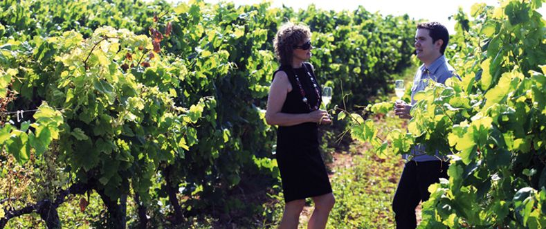ALT PENEDES Los viñedos de Vallformosa, en Vilobí