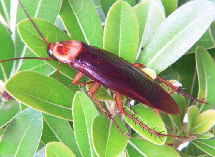 Hear bugs palmetto bugs bugs palmetto