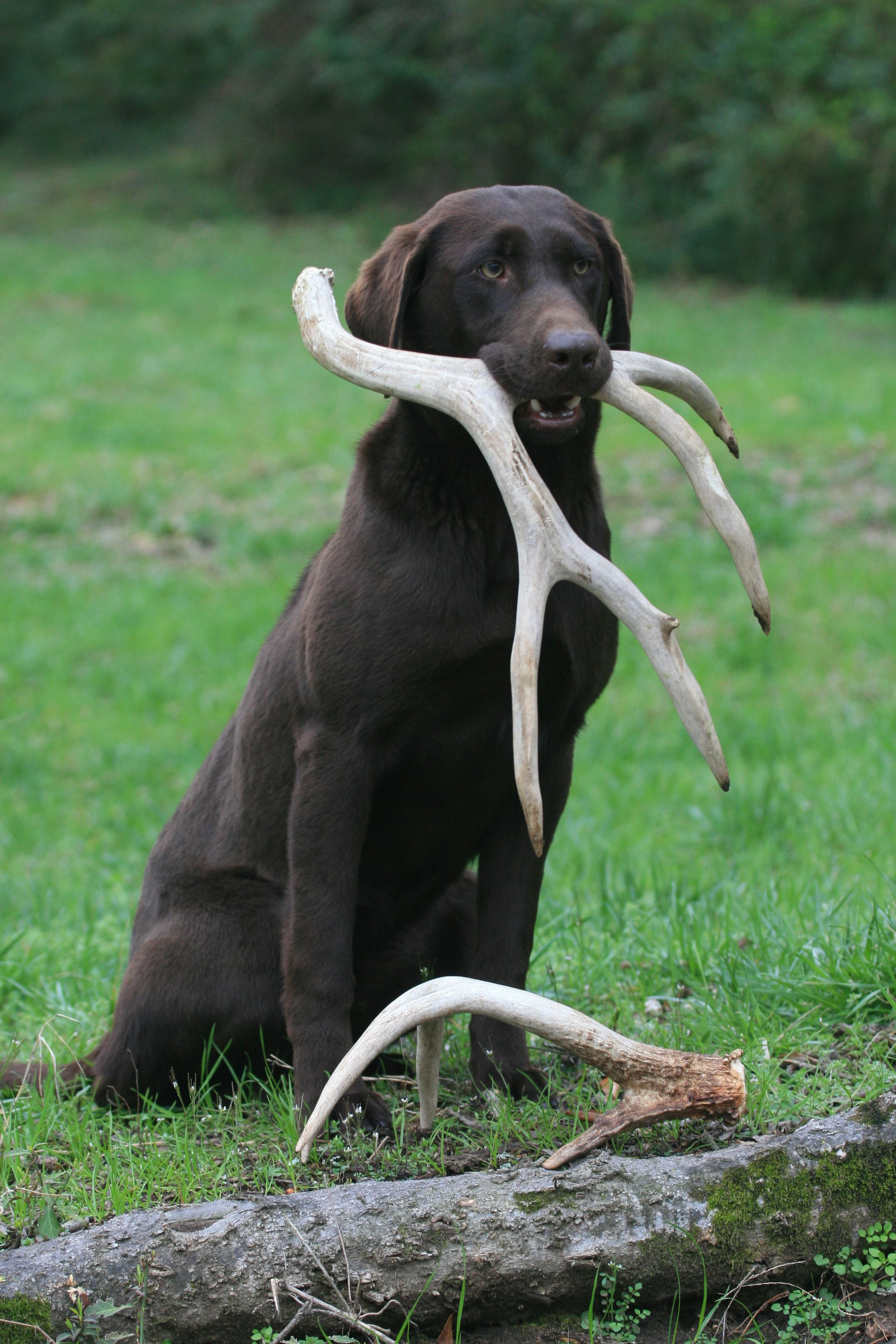 But For Real Antlers Are Totally Fine For Dogs A Favorite Of My