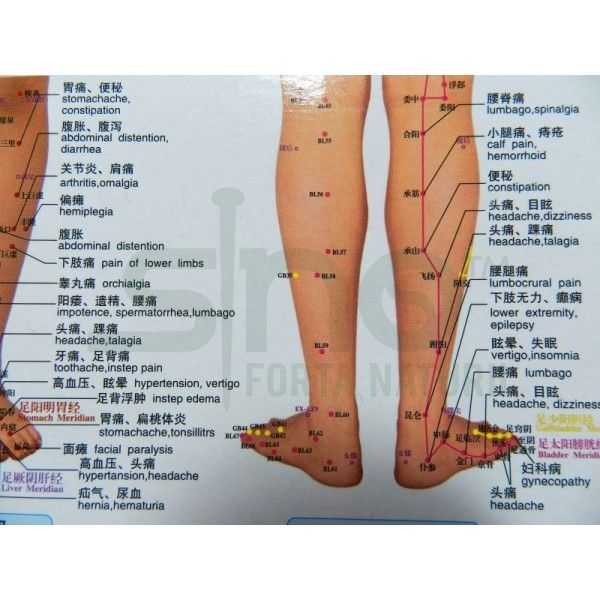 Acupuncture Points Thighs