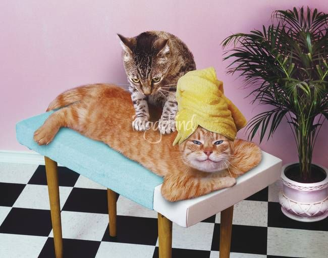 """""""Cat MassagePaws and Relax"""" by John Lund 
