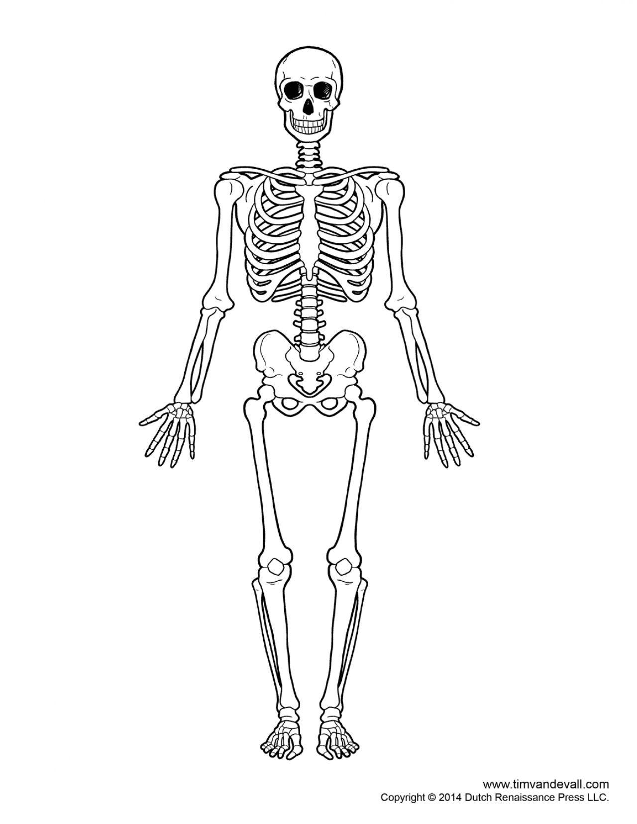 Printable Human Skeleton Diagram Ca53eba49