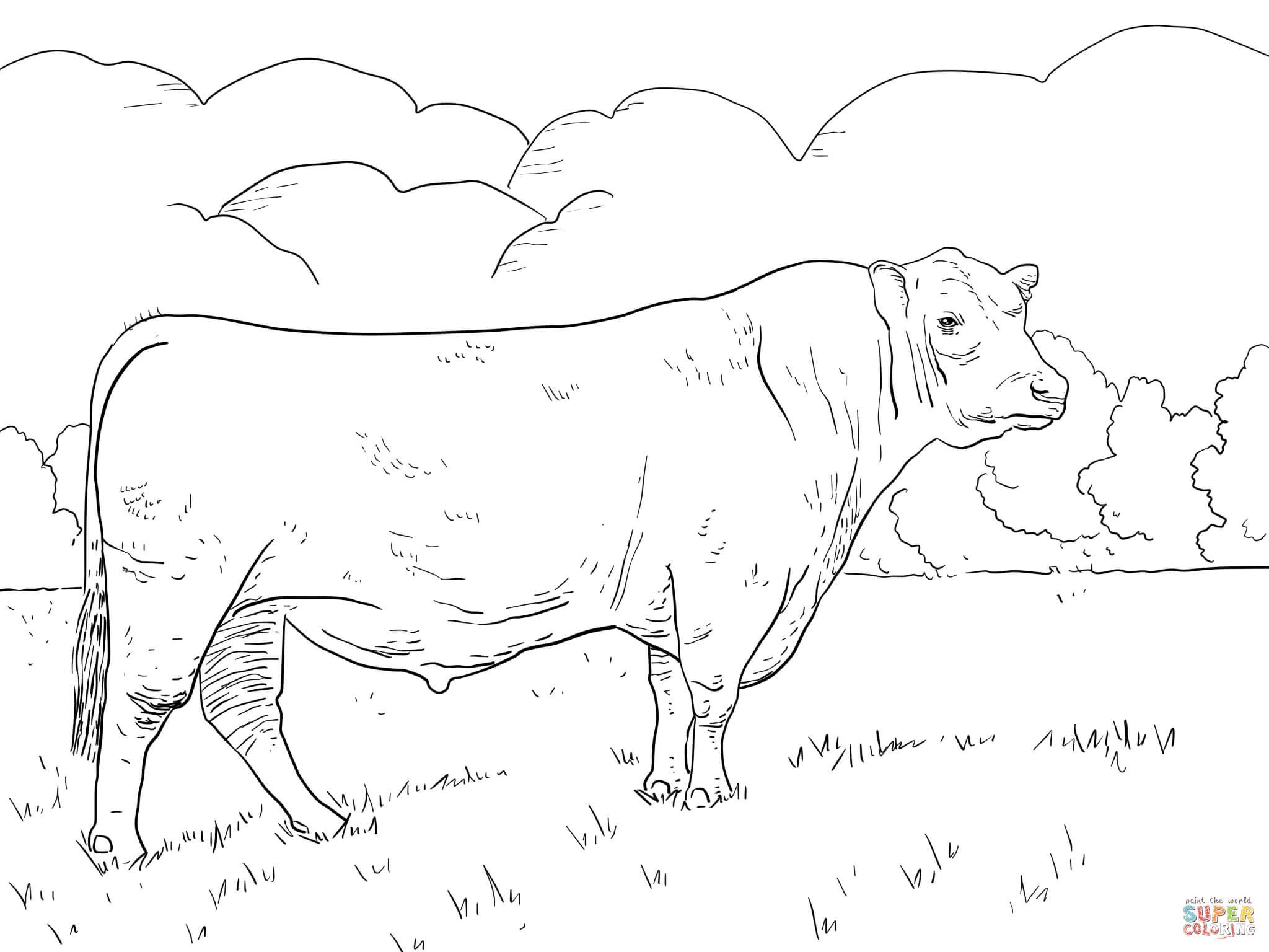 Angus Bull coloring page from Bulls category. Select from