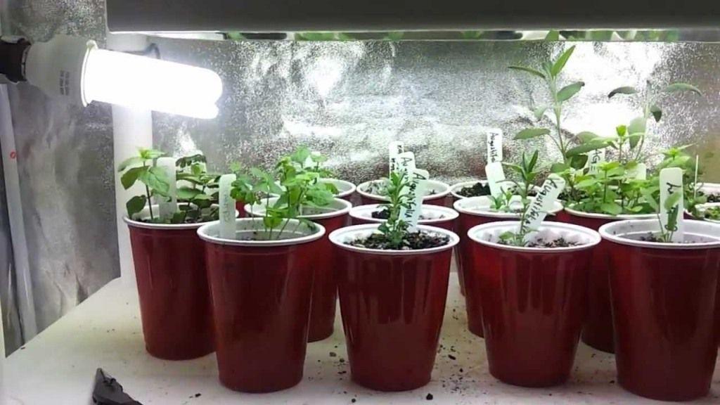 indoor herb garden kit with light - Indoor Vegetable Garden Kit