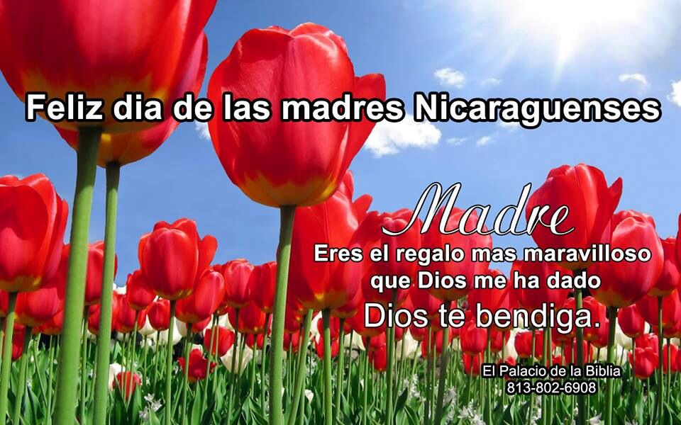Feliz Dia Madres Nicaraguenses Tulips Flowers Flower Pictures Flower Images