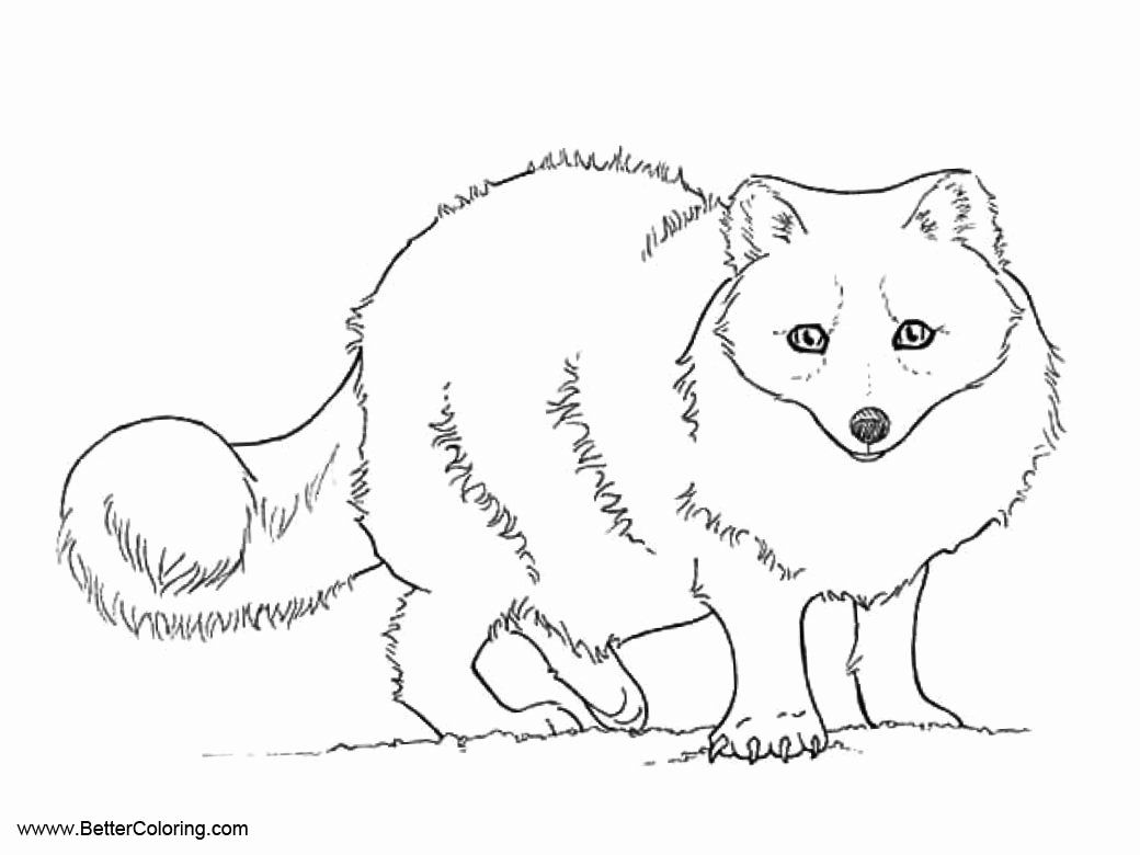Arctic Fox Coloring Page Lovely Arctic Tundra Animals Coloring Pages Arctic Fox Free Fox Coloring Page Arctic Tundra Animals Arctic Fox Color