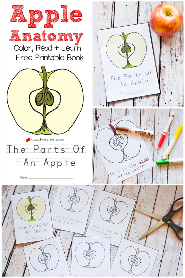 The Parts Of An Apple Color, Read, and Learn Free Printable Book ...