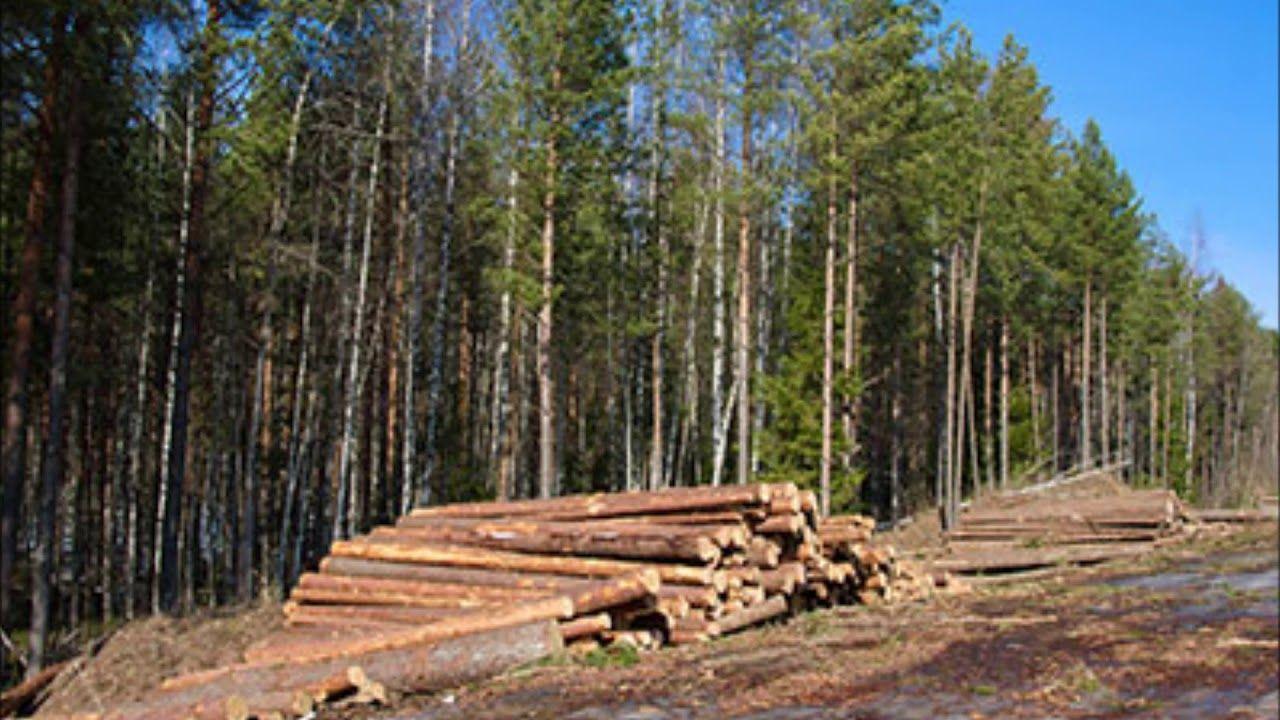Tree Clearing Service near Omaha Nebraska Omaha Junk