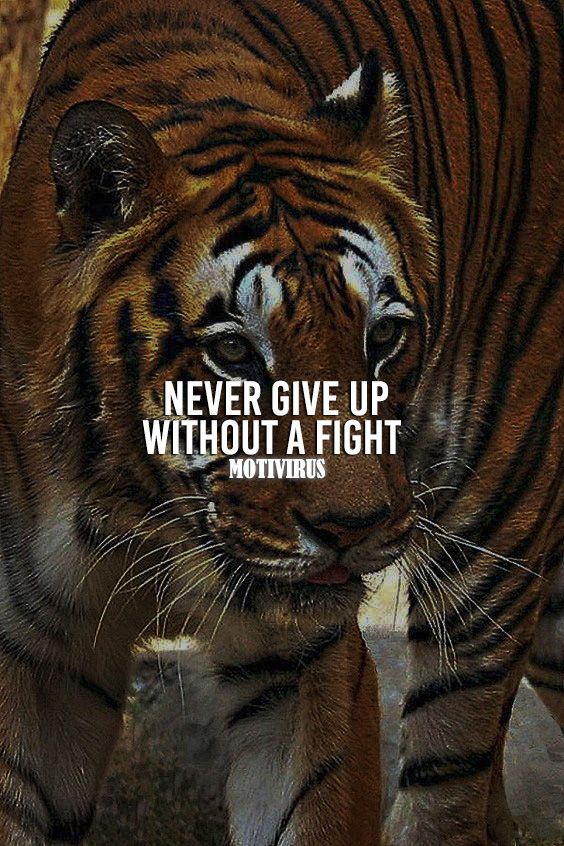 Be A Tiger Quotes Quotesgram