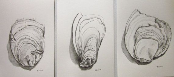 Oyster shells -- original pencil and wash drawing, set of 3