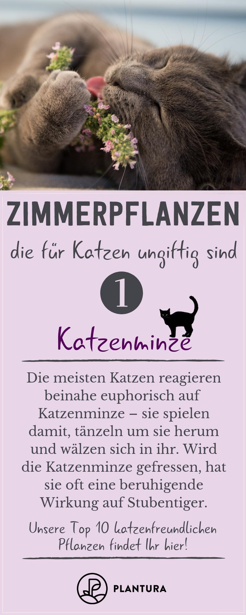 Ungiftige Zimmerpflanzen Fur Katzen Unsere Top 10 Ungiftige Zimmerpflanzen Fur Katzen Ungiftige Zimmerpflanzen Pflanzen