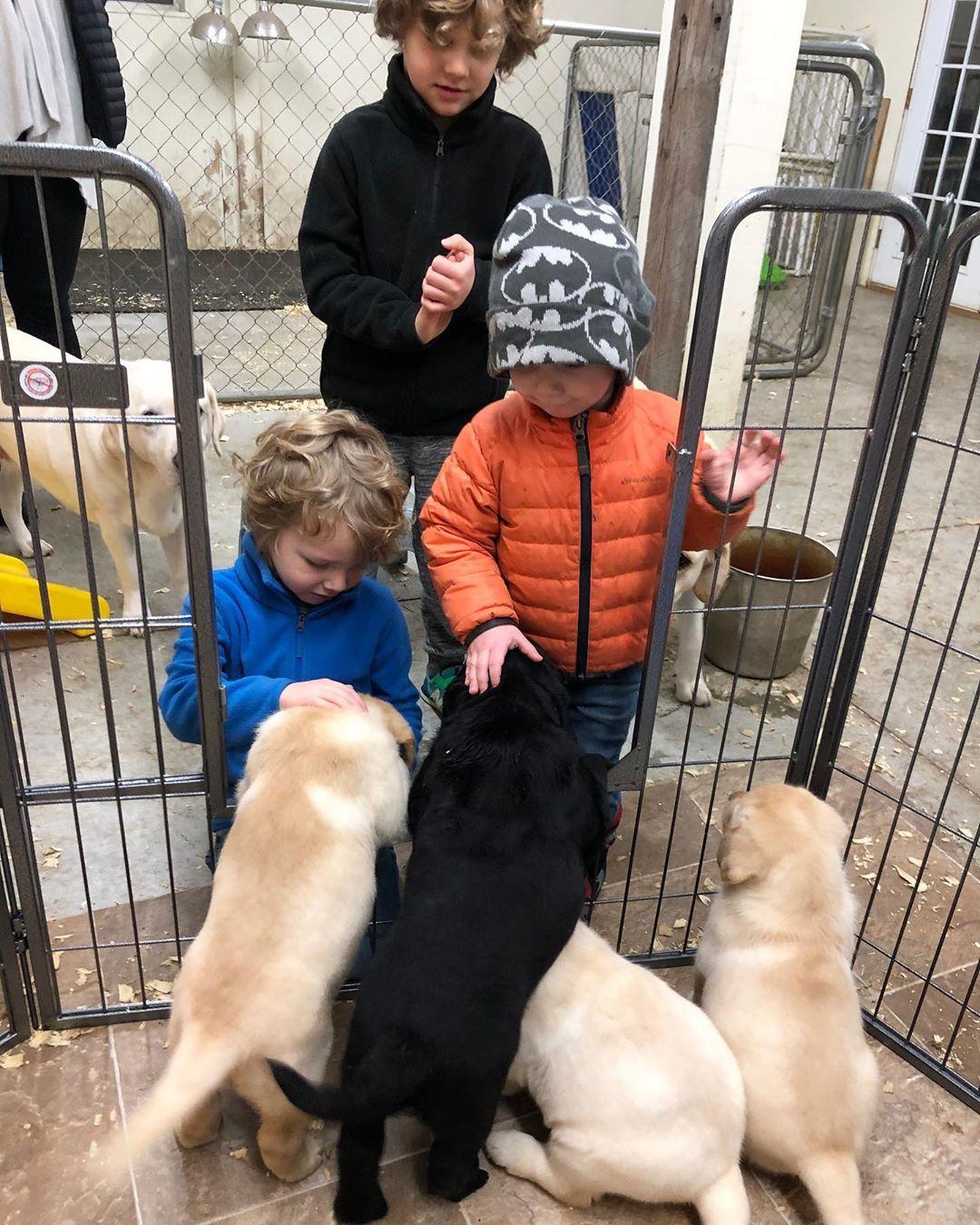 Labradorretriever Labrador Dogsofinstagram Labsofinstagram Dogs Dog Of Labs Puppy Lab Wet Dog Food Labrador Retriever Dry Dog Food