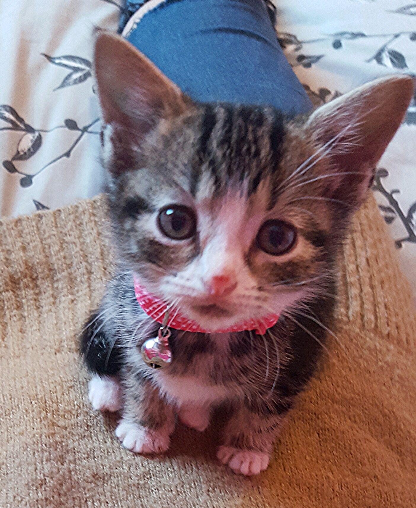 Binky Baby cats, Binky, Kittens