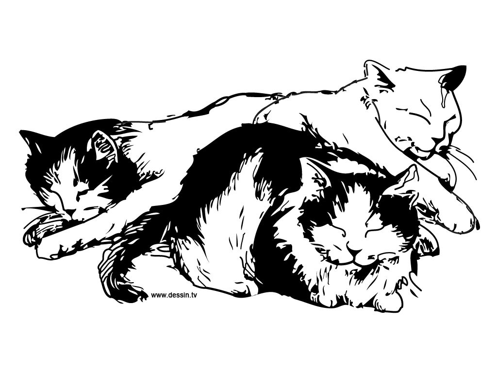 Cat Color Pages Printable Sleeping Cats Coloring Page Ready To