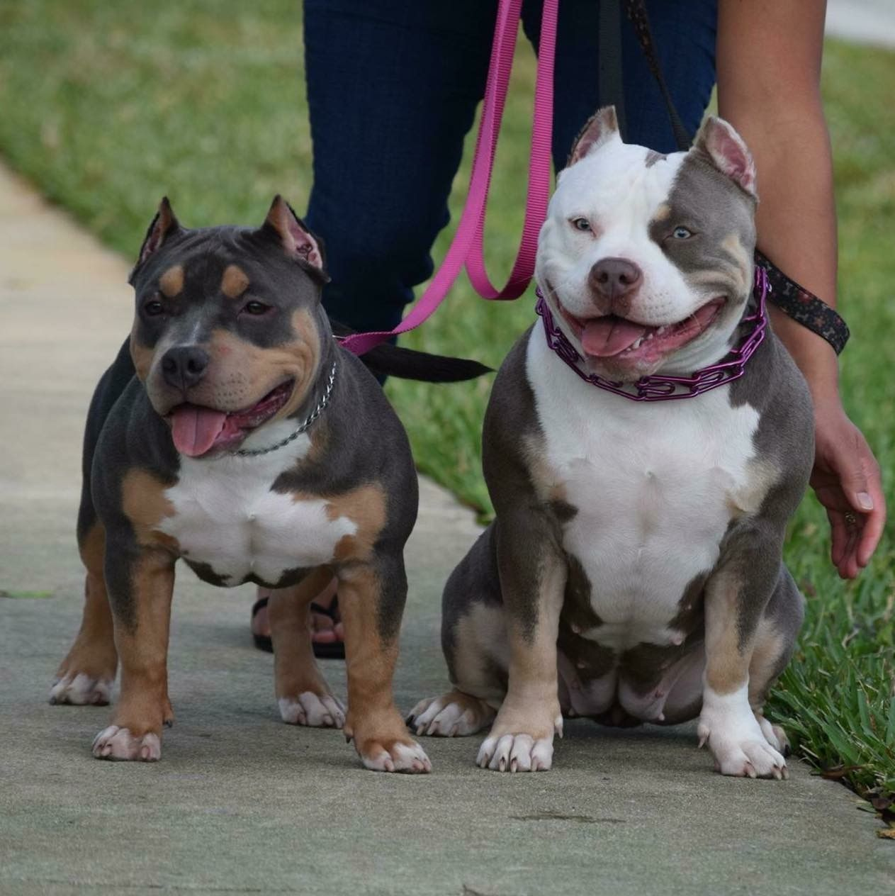 Louis V Line S Venom 5 And 8 Month Old Daughters Www