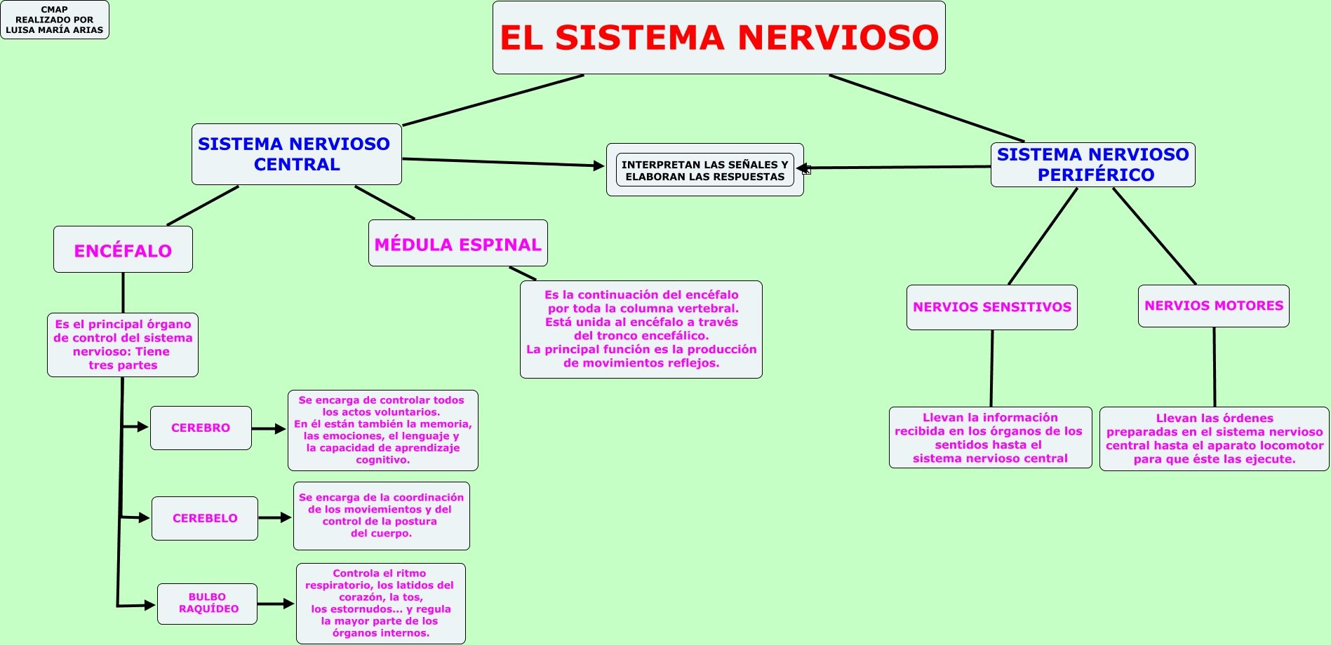la función principal del sistema nervioso