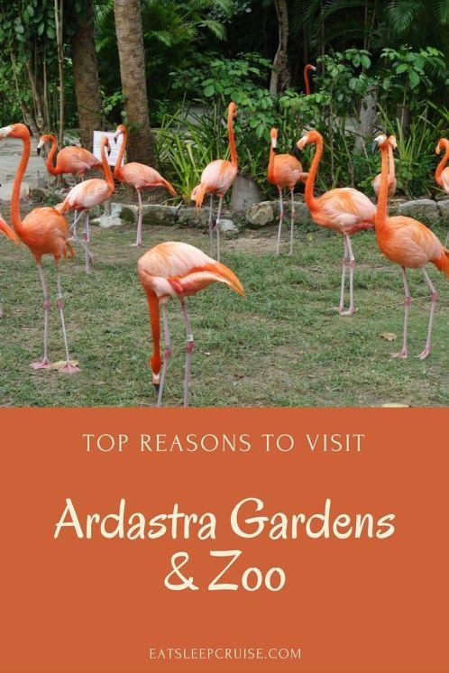 fa28ddcbc2e325c7985d45bd3c678a3a - Nassau Bahamas Ardastra Gardens And Zoo