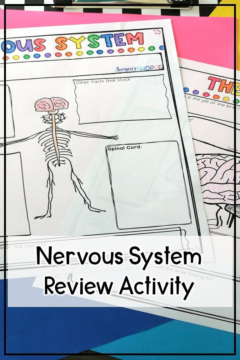 Nervous system Review the anatomy of the nervous system