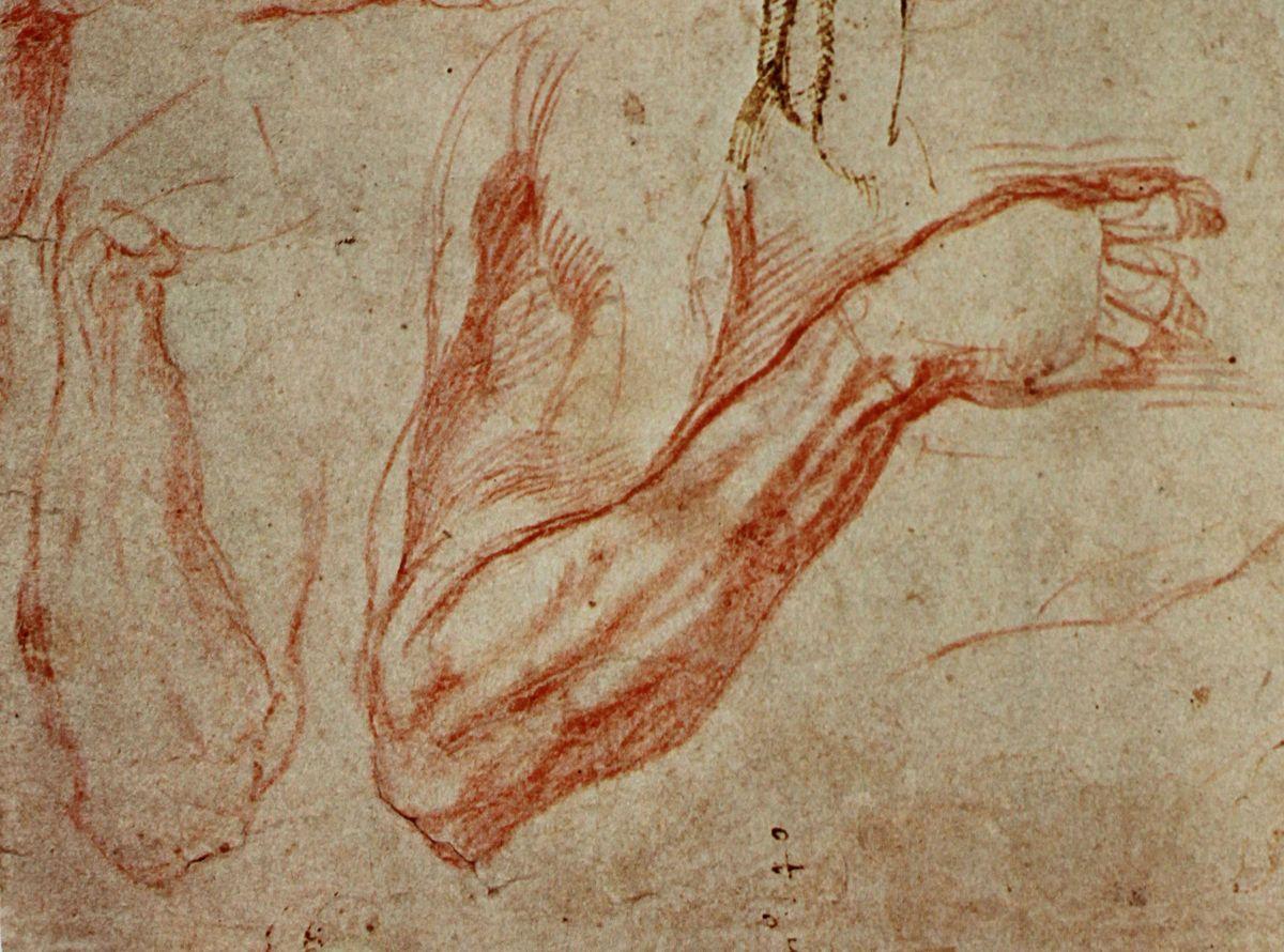 Michelangelo sketch of an arm | ART | Pinterest | Michelangelo ...