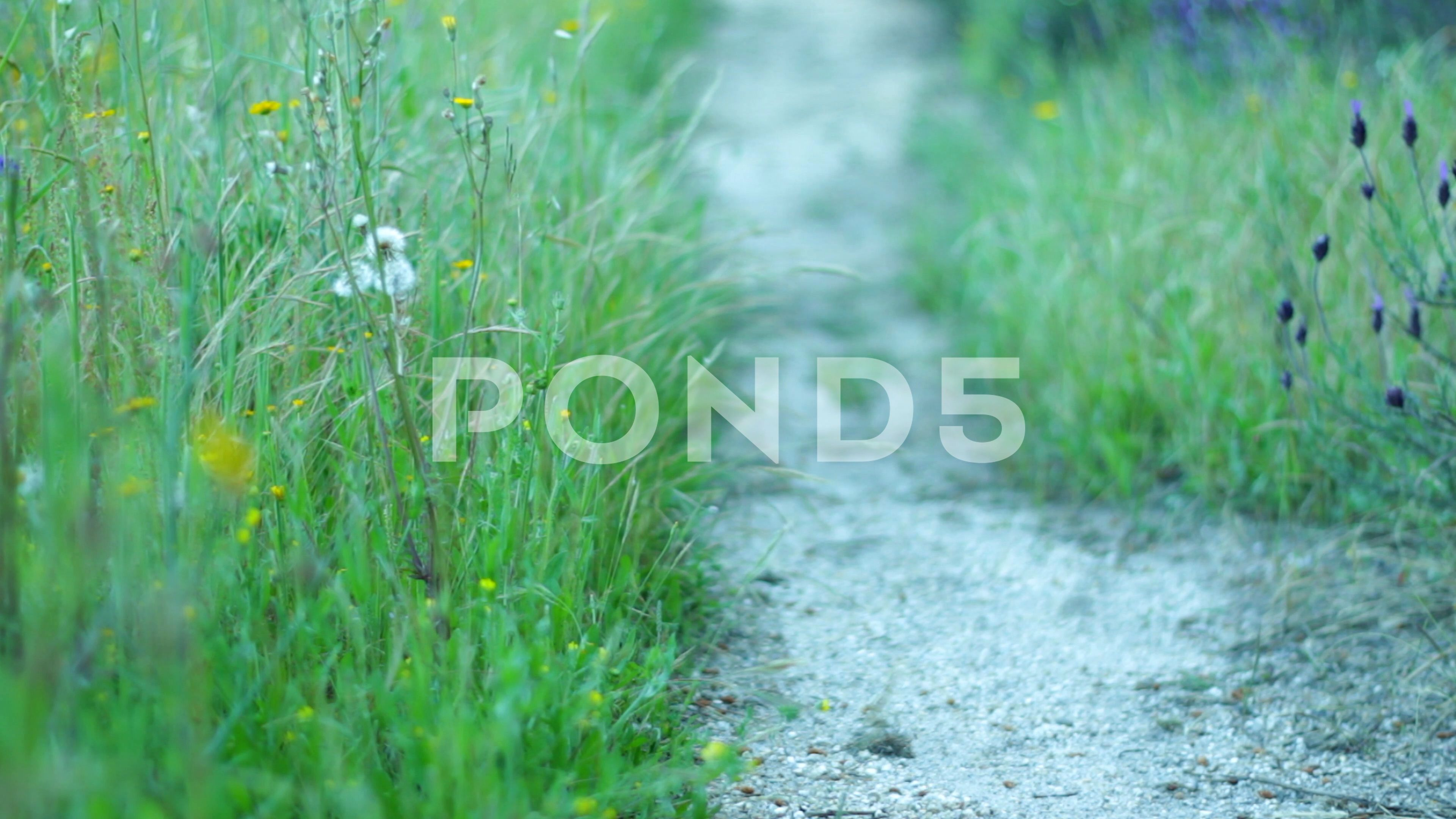 A Person Walking Outside In Nature Stock Footage Ad Walking Person Nature Footage Graphic Design Portfolio Layout Stock Footage The Outsiders