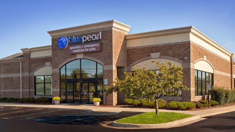 Auburn Hills Emergency Vet Pet Clinic Open 24 7 Bluepearl Michigan Animal Hospital Pet Clinic Emergency Vet