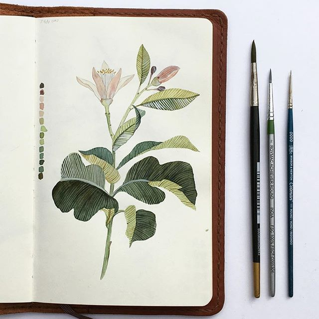Lemon 🍋blossom. #winsorandnewton #watercolor #moleskineart #moleskine #sketchbook #lemonblossom #botanicalwatercolor #illustration #botanicalillustration #watercolour
