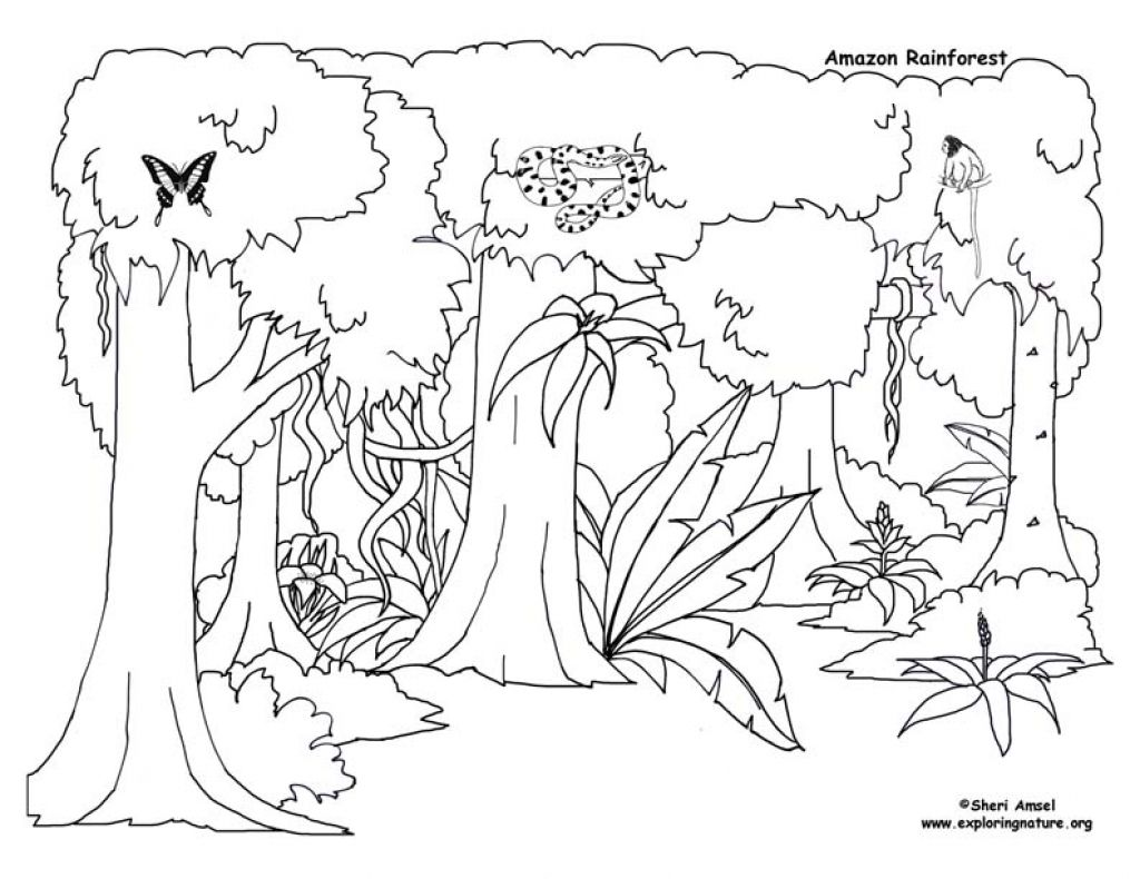 Reduced Tropical Rainforest Coloring Page Happy Pages Drawing To