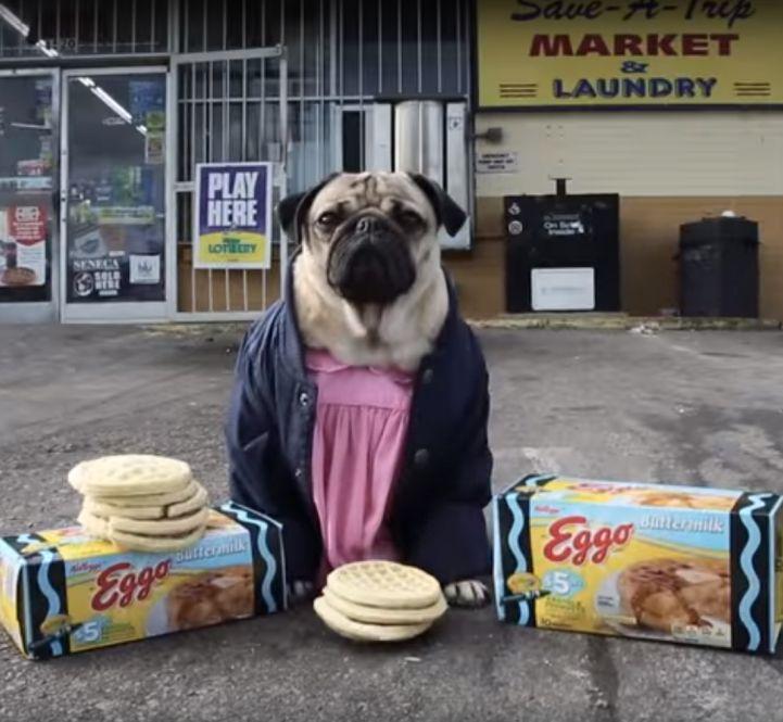 Stranger Pugs Hilariously Reimagines Stranger Things As An