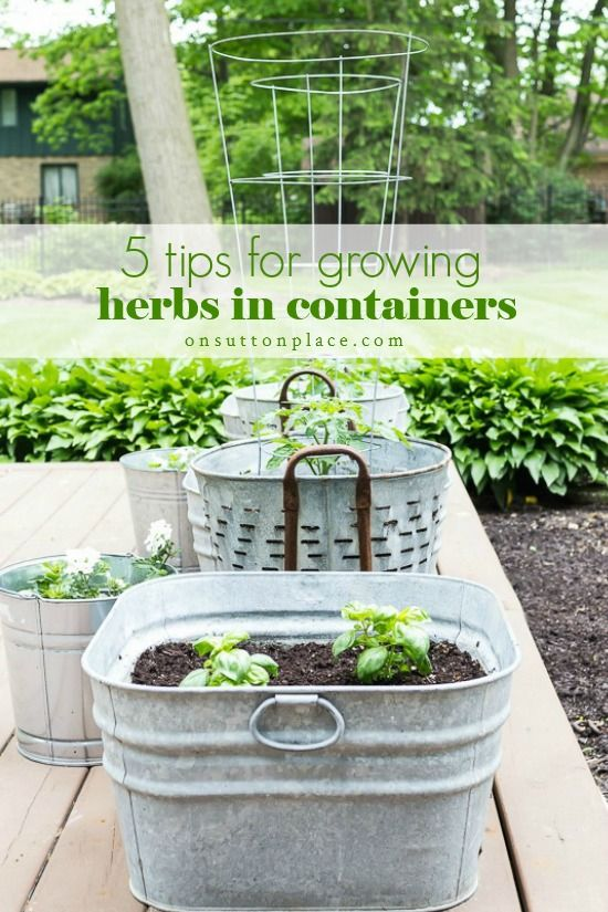 5 Tips for Growing Herbs in Containers is part of Herb containers, Growing herbs, Container gardening vegetables, Container gardening, Plants, Growing vegetables - 5 simple tips for successfully growing herbs in containers  Includes a list of herbs that can be planted together & ways to use herbs in your everyday life