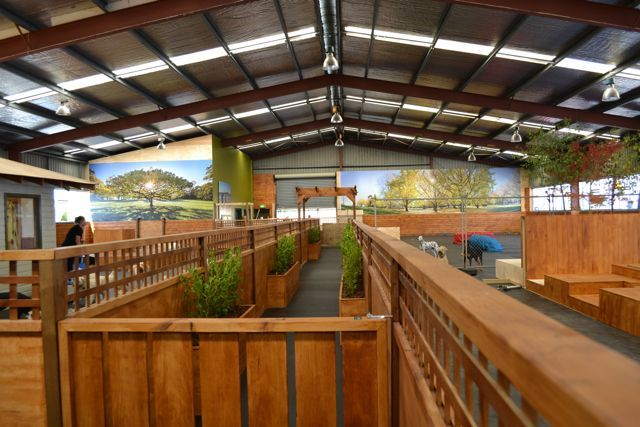 Indoor Dog Park, Play Areas And