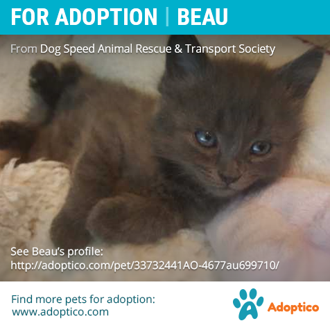 http://adoptico.com/cat-adoption/male-mongrel/arthur-ontario/33732441AO-4677au699710/  #‎catForAdoption‬ ‪#‎catAdoption #forAdoption‬ ‪#‎petForAdoption‬ ‪#‎petAdoption‬ ‪#‎ontario‬ ‪#‎pet‬ ‪#‎cat‬ ‪#animal #‎adoption‬ #cute #kitten #young #arthur #tiny