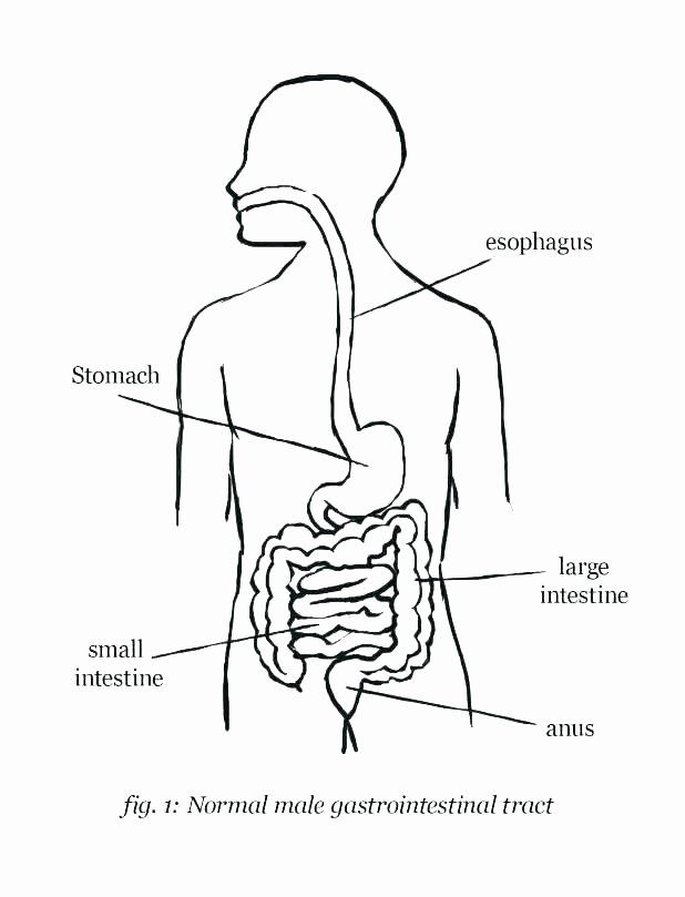 50 Digestive System Worksheet Answer Key in 2020